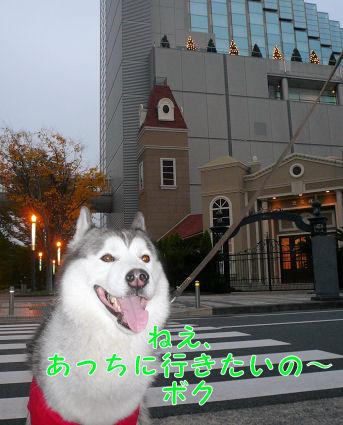f0112407_0375933.jpg