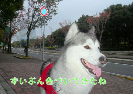 f0112407_0382327.jpg