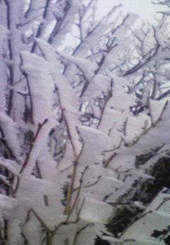 氷ノ山、初冠雪??_f0101226_1611781.jpg