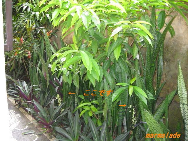 f0191927_935365.jpg
