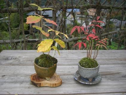 ミニ盆栽-1_f0184939_14553436.jpg