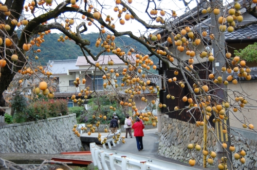 2008年11月度「大人の林間学校」_c0108460_20475171.jpg