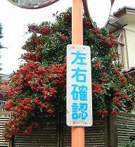 通勤路の秋_f0139963_885414.jpg