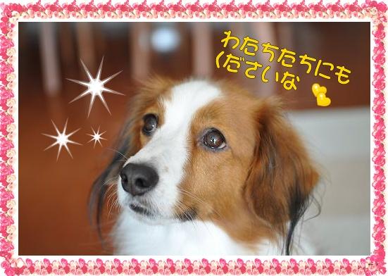 ・・・の秋_c0065512_22434570.jpg