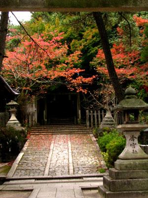 紅葉探訪 今宮神社_e0048413_19542914.jpg