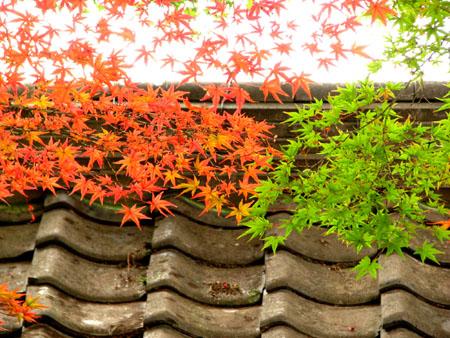 紅葉探訪 今宮神社_e0048413_1955840.jpg
