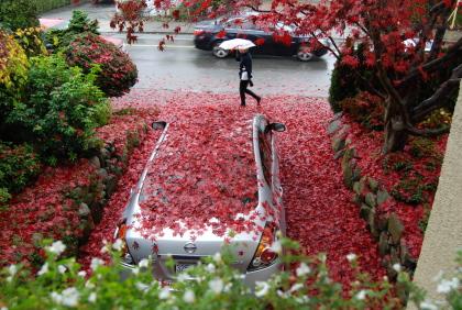 楓の落ち葉に埋もれた車。_d0129786_14354624.jpg
