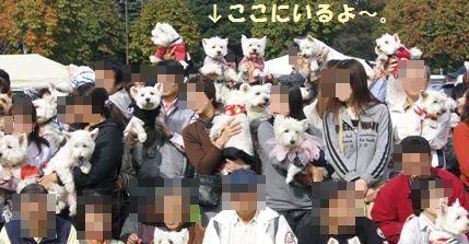 d0098316_16515931.jpg