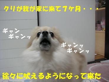 c0179136_22103769.jpg