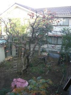 借景の柿の木☆_c0152341_14511354.jpg