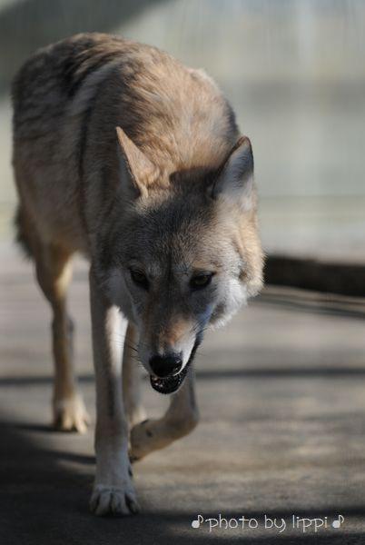 天王寺動物園 ちょこっと散歩_b0024758_22447100.jpg