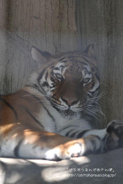天王寺動物園 ちょこっと散歩_b0024758_22554238.jpg