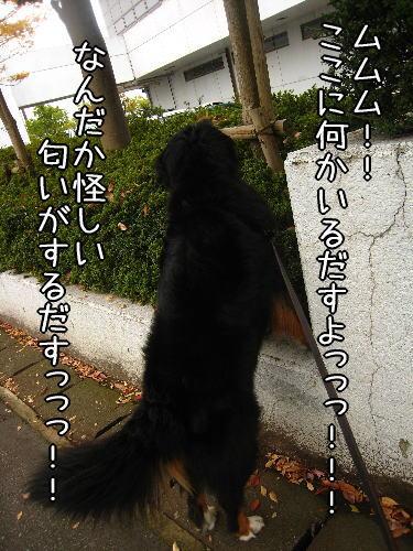f0187974_218432.jpg