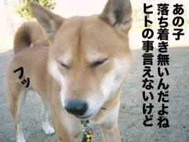 b0057675_1125194.jpg
