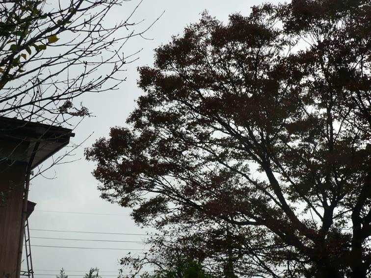 灰色の 空にぐわっと 落ち葉飛び_b0126182_1761842.jpg