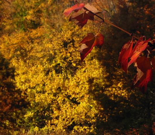 すっかり紅葉のセントラルパーク_b0007805_1934561.jpg