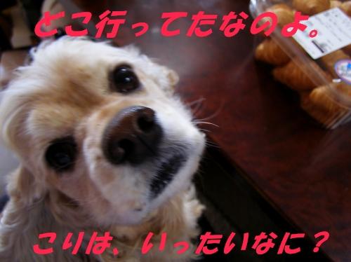 b0067012_21123738.jpg
