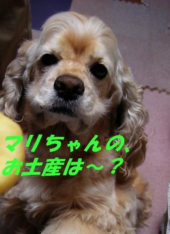 b0067012_22142916.jpg