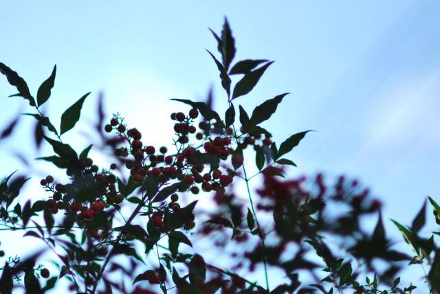 秋も深まって_e0134515_11303455.jpg