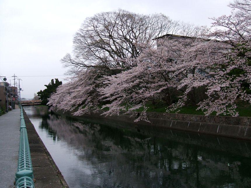 「番外・・・名残りの桜」_d0133024_1016416.jpg