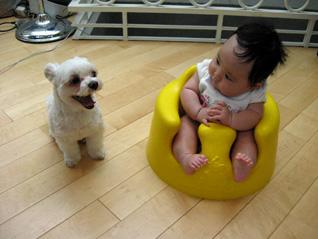 元祖ひとり娘、愛犬さくらと娘の関係_f0179528_2122849.jpg