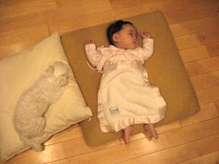 元祖ひとり娘、愛犬さくらと娘の関係_f0179528_2324946.jpg