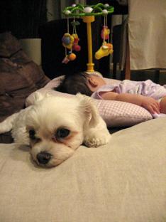 元祖ひとり娘、愛犬さくらと娘の関係_f0179528_251088.jpg