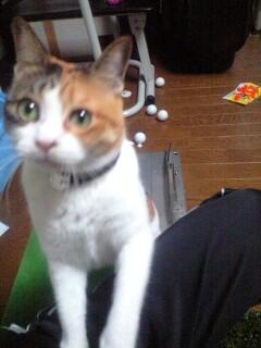 ミニーちゃん_b0072729_2233573.jpg