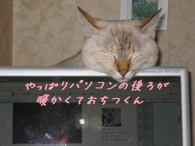 b0151748_12511258.jpg
