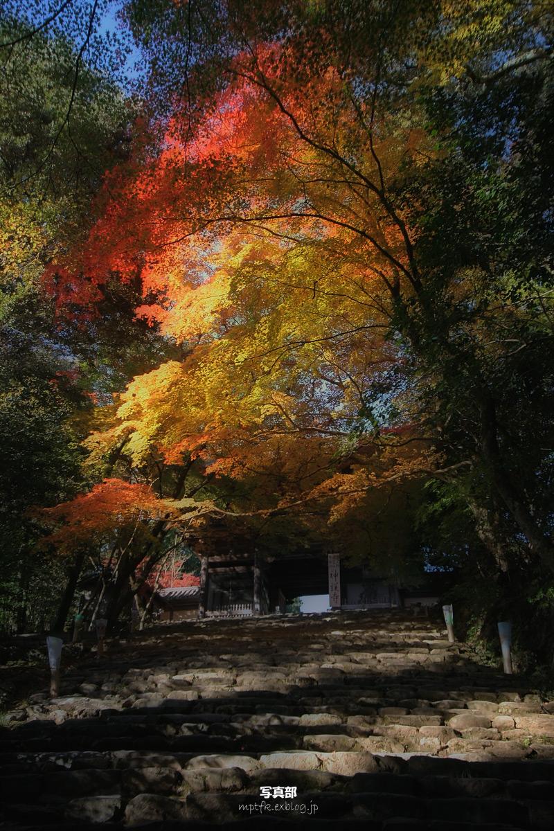 京都 神護寺 2_f0021869_1233574.jpg