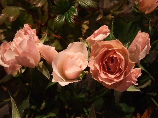 オークリーフ(がんばってお店の花も)_f0049672_18112661.jpg