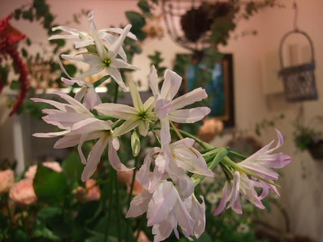 オークリーフ(がんばってお店の花も)_f0049672_18125545.jpg