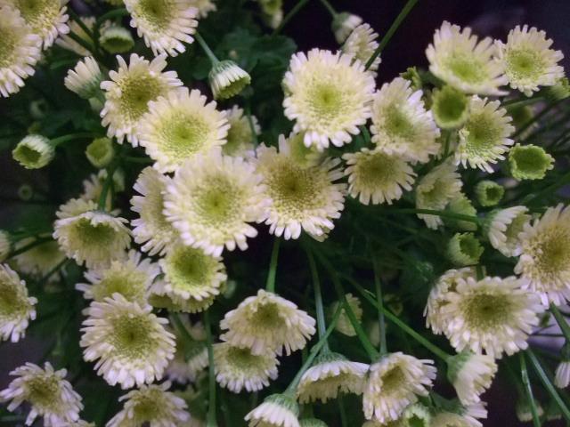 オークリーフ(がんばってお店の花も)_f0049672_18132984.jpg