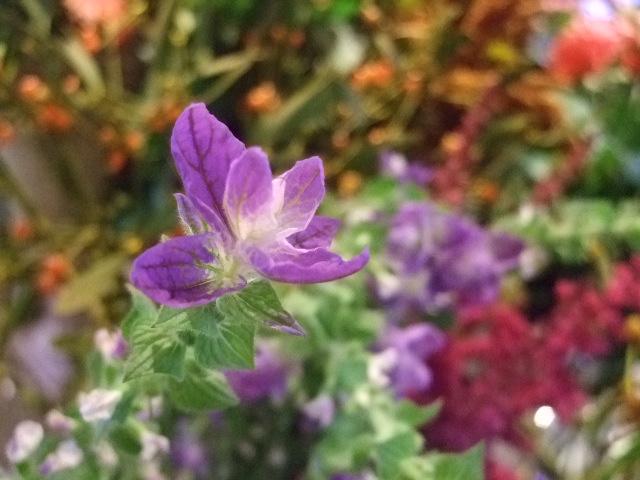 オークリーフ(がんばってお店の花も)_f0049672_18205343.jpg