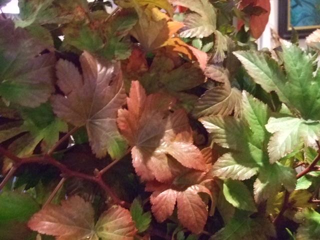 オークリーフ(がんばってお店の花も)_f0049672_1891999.jpg