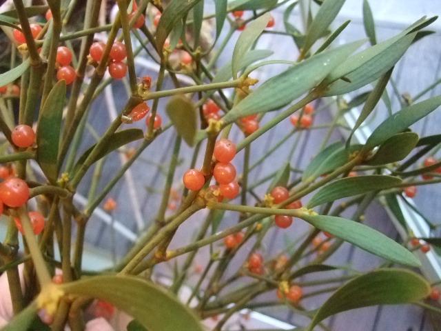 オークリーフ(がんばってお店の花も)_f0049672_1893752.jpg