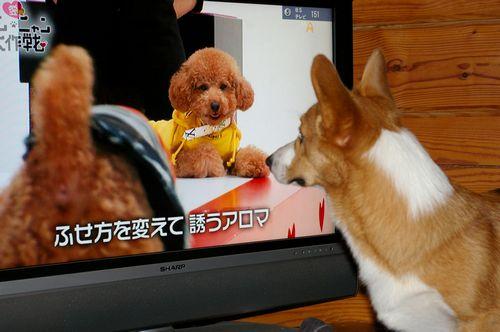 TVに夢中_c0127703_19342625.jpg