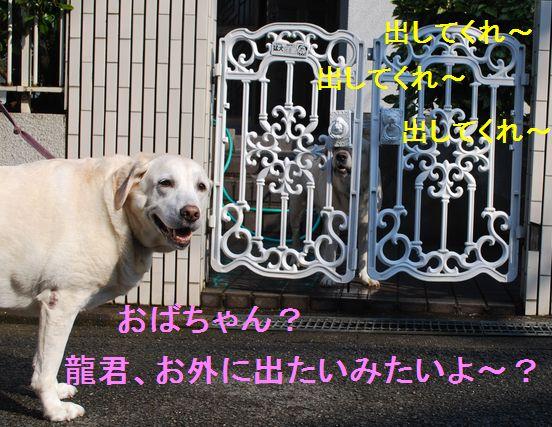 f0183814_1235020.jpg