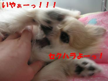 c0179136_15425655.jpg
