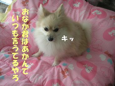 c0179136_1543236.jpg