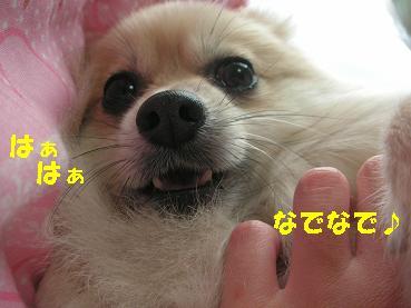 c0179136_1543636.jpg