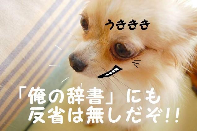 b0112758_1110536.jpg