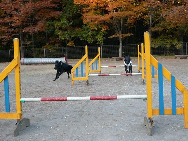 2008 モスミン イルミネーション @ 武蔵丘陵森林公園_c0134862_1001427.jpg