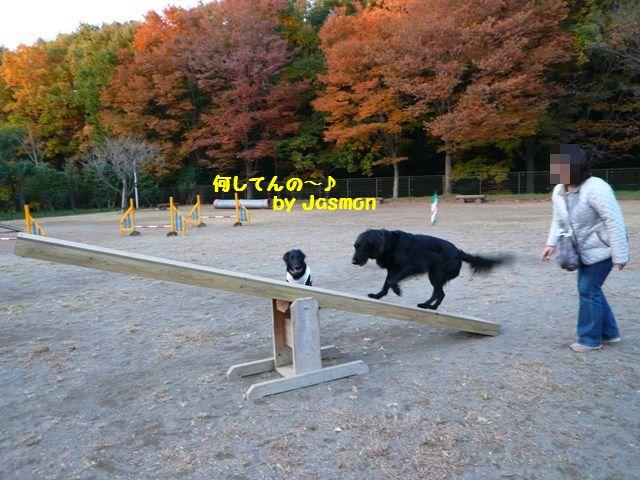 2008 モスミン イルミネーション @ 武蔵丘陵森林公園_c0134862_1005663.jpg