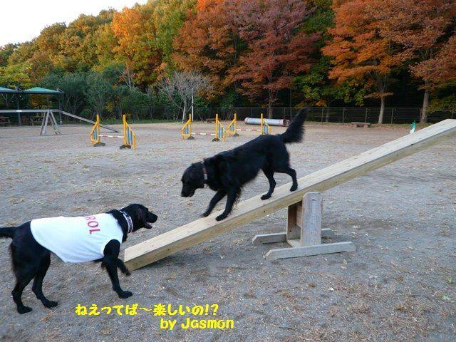 2008 モスミン イルミネーション @ 武蔵丘陵森林公園_c0134862_1012749.jpg