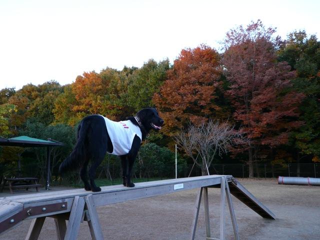 2008 モスミン イルミネーション @ 武蔵丘陵森林公園_c0134862_101534.jpg