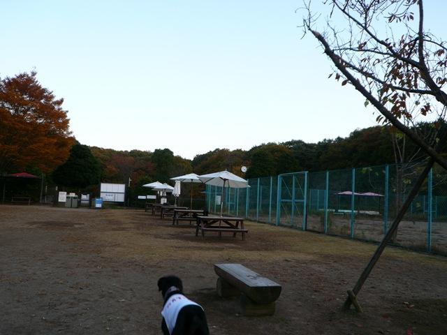 2008 モスミン イルミネーション @ 武蔵丘陵森林公園_c0134862_1022484.jpg