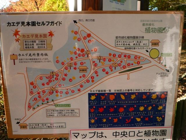 2008 モスミン イルミネーション @ 武蔵丘陵森林公園_c0134862_955137.jpg
