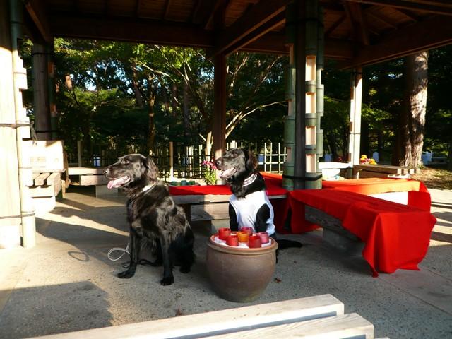 2008 モスミン イルミネーション @ 武蔵丘陵森林公園_c0134862_9562232.jpg
