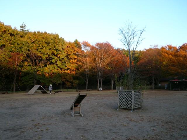 2008 モスミン イルミネーション @ 武蔵丘陵森林公園_c0134862_959040.jpg